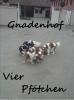 Hundeklub: Gnadenhof ~ Vier Pfötchen ~