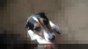 Nina7723 - Hundezüchter bei Dogzer