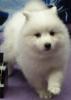 souldrin69 - Hundezüchter bei Dogzer