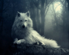 Saphira1379 - Hundezüchter bei Dogzer
