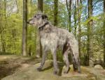 Deerhound Bild