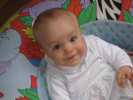 Happy - Männlich Epagneul Breton (1 Jahr)
