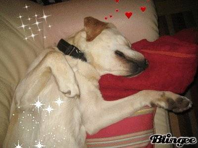 balou - Männlich Labrador (5 Jahre)
