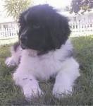 Bepper - Wolf (11 Monate)