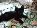 Hunter - (3 Monate)