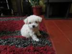 Luly - (1 Jahr)