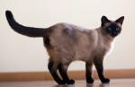 Katze Bild
