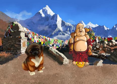 Nehmt einen Hund auf, der direkt aus dem Himalaya kommt: der tibetische Spaniel!